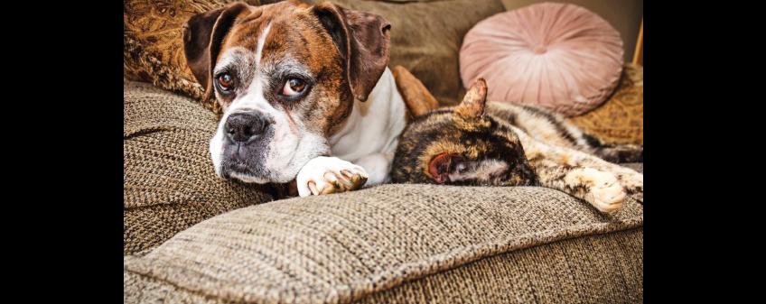 Jak řešit bolesti u psů? První pomoc proti bolesti