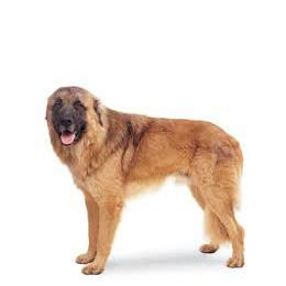 Atlaský horský pes - Paper-Dog 744e30a93a